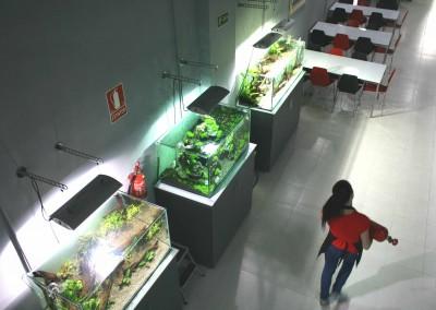 ACUARIOS EXPOSICIÓN