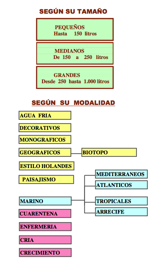 Sociedad Acuariófila Valenciana