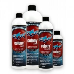 Colony-500x500