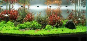 acuario 17